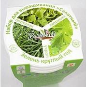 Набор для выращивания Салатный №1 Зелень круглый год петрушка, укроп, портулак овощной фото
