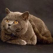 Стерилизация животного фото