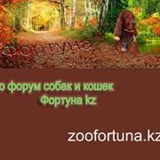 Zoo форум Фортуна кз фото