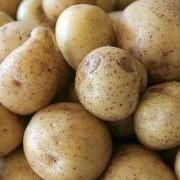 Розовый и белый картофель Киев фото