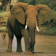 Охота в Замбии на заболоченных низинах реки Замбези фото