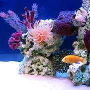 Оформление и дизайн аквариумов фото