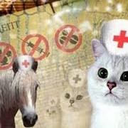 Лекарственные препараты для животных. Продажа ветеринарных лекарственных препаратов в Узбекистане. фото