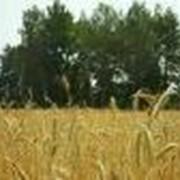 Сушка зерна на элеваторе. фото