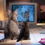 Размещение рекламной продукции на радио и ТВ, медиапланирование фото