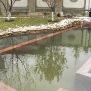 Плавательные эко-водоемы фото