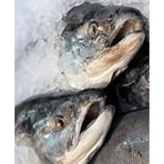 ВАРЭКС-7 - для охлажденной рыбы фото