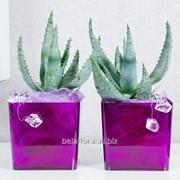 """Кашпо пластиковое """"Орхидея квадрат"""" фиолетовое прозрачное DKW 13 PS фото"""