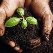 Удобрения органические без химии фото