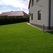 Профессиональное озеленение. фото