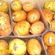 Плод кактуса, импортная продукция ОПТОМ фото