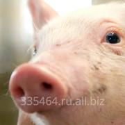 Ароматизатор для корма животным Барбарис фото