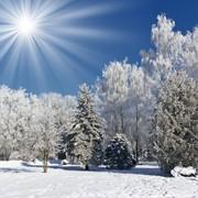 Чудеса зимой в парке Дружбы народов! фото