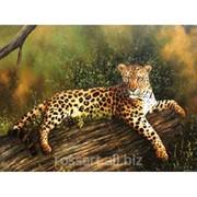 Детская картина cheetah фото