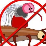Борьба с осами, комарами, клещами. Дезинсекция фото