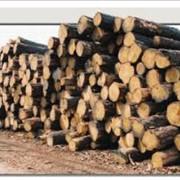 Лесозаготовка Остерское лесное хозяйство, ДП фото