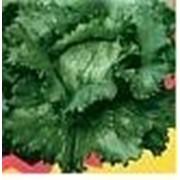 Пакетированные семена овощных культур, семена салата Тетис фото