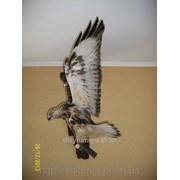 Чучело орла фото