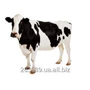 Beef Meat / Говядина фото