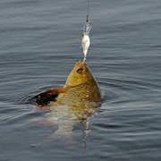 Рыболовство Житомир,рыбалка в Житомире,рыбалка в Житомирской области. фото