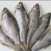 Рыба сушеная или соленая фото