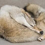 Натуральный мех волка фото