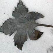 Кованый лист винограда фото