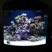 Виготовлення акваріумів фото