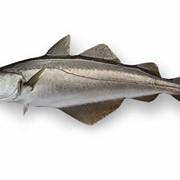 Рыба Минтай 30+ фото
