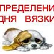 Прибор для определения дня вязки собаки по капле слюны фото