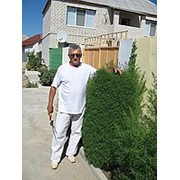 Садовник, озеленитель, ландшафтный дизайнер в Николаеве фото