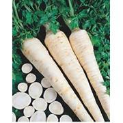 Семена петрушки сахарной фото