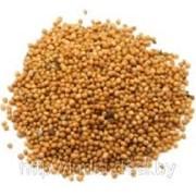 Продам семена горчицы желтой 50кг фото