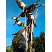 Экспозиция с птицами Чомга фото