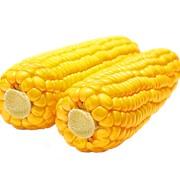 Оборудование для кукурузы фото