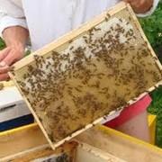 Мёд из своей пасики фото