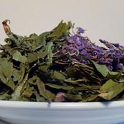 Иван чай (кипрей) фото