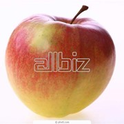 Яблоки сорт Чемпион продажа оптом от 100 тонн. фото