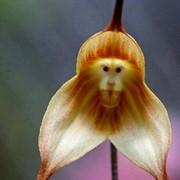 Орхидеи СУПЕР УПАКОВКА 50шт МИКС+10шт в подарок фото