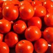 Помидоры, купить помидоры, купить помидоры оптом, купить помидоры в Украине фото