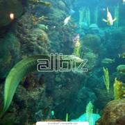 Оформление морского аквариума,изготовление на заказ фото