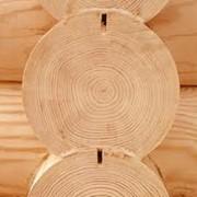 Сырье древесное фото