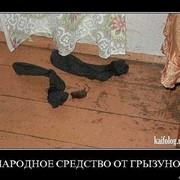 Дератизация-Уничтожение крыс и мышей. фото