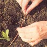 Удобрения для сельского хозяйства фото