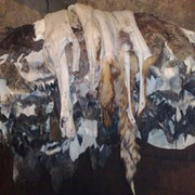 Лиса в сырье(мокросоленые) фото