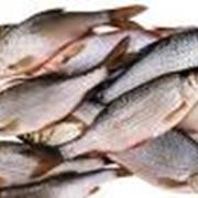 Рыба пресноводная свежая обработанная фото