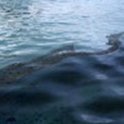 Идентификация мест утечки нефтепродуктов в акватории портов (бухт) фото