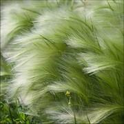 Гербицид ранний послевсходовый Базис фото
