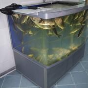Оборудование рыбоводное фото