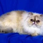 Стерилизация кошек фото